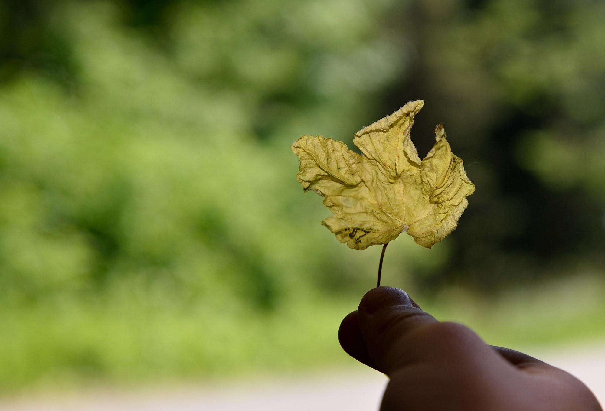Leaves, leaving a green Earth for future generations